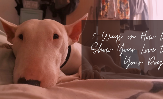 5 Ways on How to Show Your Love to Your Dogs